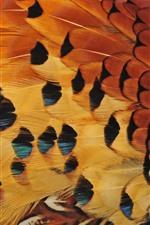 Penas de pássaros, textura
