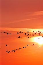 Birds, sky, sunset, flight