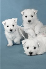 Preview iPhone wallpaper Cute four white puppies