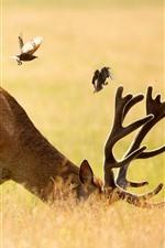 Deer and birds, grass, summer