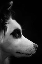 Preview iPhone wallpaper Dog, face, side view, black background