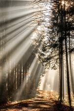 Preview iPhone wallpaper Forest, sun rays, trees, morning, nature