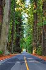 Preview iPhone wallpaper Forest, trees, road, highway
