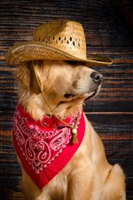 Preview iPhone wallpaper Funny dog, hat, scarf