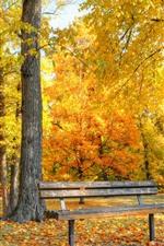Golden autumn, bench, trees, leaves, park