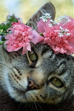 Gray cat, flowers