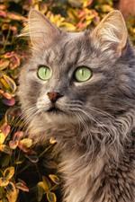 Preview iPhone wallpaper Gray cat, green eyes, autumn