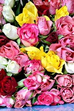 Lot of roses, pink, yellow, white, red