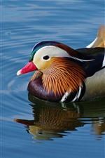 Preview iPhone wallpaper Mandarin duck, beautiful feathers, water