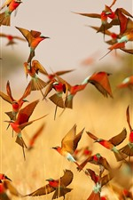 Preview iPhone wallpaper Many birds flight