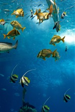 Preview iPhone wallpaper Many fish, sea, underwater