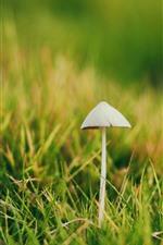 Preview iPhone wallpaper Mushroom, green grass, spring