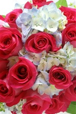 One bouquet flowers, red rose, white hydrangea