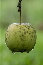 Preview iPhone wallpaper One green apple, water, hazy background