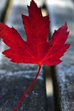 One red maple leaf, wood bench