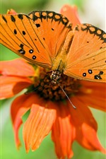 Preview iPhone wallpaper Orange flower and butterfly
