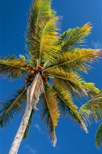 Preview iPhone wallpaper Palm trees, trunk, blue sky