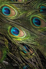 Preview iPhone wallpaper Peacock feather close-up, texture