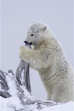 Preview iPhone wallpaper Polar bear, snow, dry tree