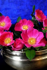 Preview iPhone wallpaper Roses, pink flowers, bowl