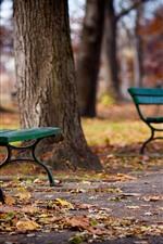 Alguns bancos, árvores, parque, chão, folhas