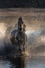 Preview iPhone wallpaper Some horses running in water, splash