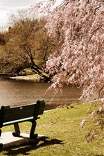 Preview iPhone wallpaper Spring, tree flowers bloom, pond, park, bench