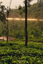 Sri Lanka, trees, hut, countryside, light line