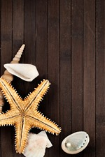 Preview iPhone wallpaper Starfish, shell, pearl, rope