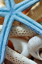 Preview iPhone wallpaper Starfish, shell, still life