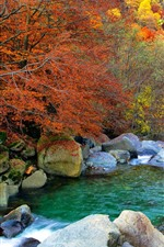 Preview iPhone wallpaper Stones, creek, trees, bushes, autumn
