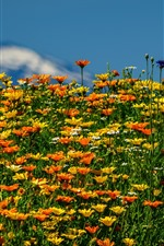 Preview iPhone wallpaper Summer, yellow and orange wildflowers