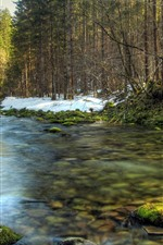 Preview iPhone wallpaper Trees, creek, moss, stones, snow