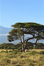 Preview iPhone wallpaper Trees, grass, mountain, nature landscape