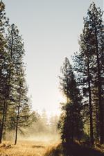 Trees, sun rays, fog, morning