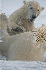 Preview iPhone wallpaper Two polar bears playful, snow, sea