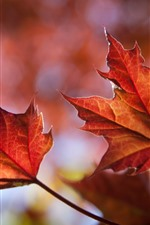 Preview iPhone wallpaper Two red maple leaves, autumn