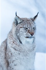 Preview iPhone wallpaper Wildcat, lynx, winter, bokeh