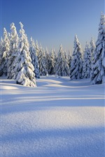 Preview iPhone wallpaper Winter, thick snow, trees, forest, white world