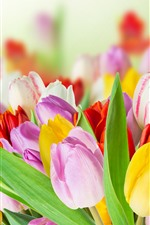 Yellow, pink, white tulips, bouquet