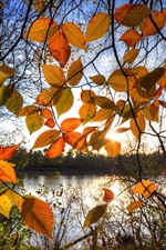 Preview iPhone wallpaper Autumn, yellow leaves, backlight, lake