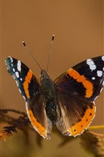 Preview iPhone wallpaper Butterfly, moth, antennae, wings