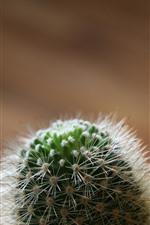 Preview iPhone wallpaper Cactus, needle, plants