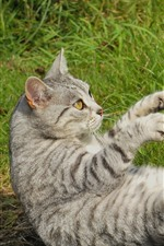 Cat play on ground, paws