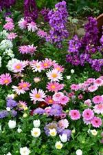 Colorful flowers, pink, white, purple, vase, garden