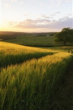 Preview iPhone wallpaper Countryside, green fields, trees, sun rays