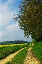 Countryside, road, trees, white clouds, rapeseed flowers