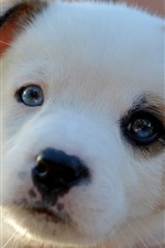Preview iPhone wallpaper Cute puppy look at you, face, hazy