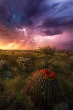 Preview iPhone wallpaper Desert, storm, cacti, clouds