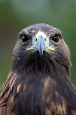Preview iPhone wallpaper Eagle front view, head, beak, eyes